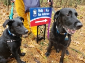 Shadow (right) and Ringo (left) during the 2018 Walk and Wag.